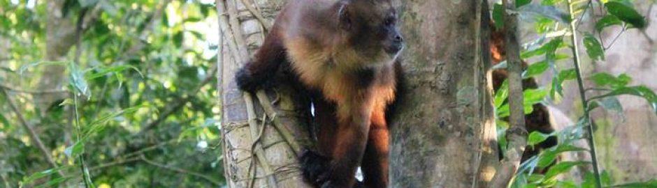 Mangfoldige Peru amazonas