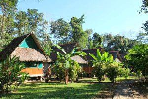 Mit hjem i junglen i 4 dage